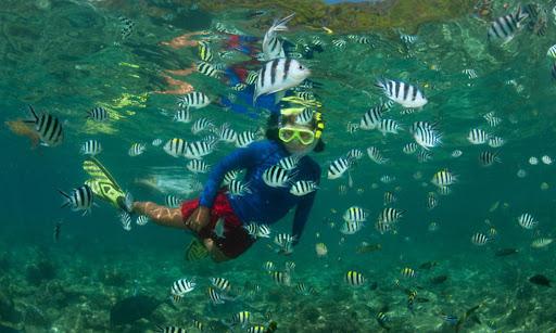 wsc escuela náutica snorkeling